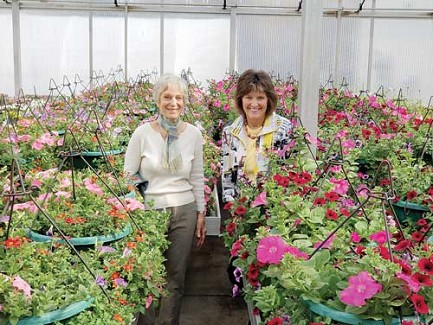Submitted photoMarilyn Norden, volunteer for the flower basket fundraising campaign, and Pat LaPorte, right, DRI Design Committee chair, stand among the 100 planters at Forth Floral greenhouse that will soon be ready to hang in downtown Rhinelander.
